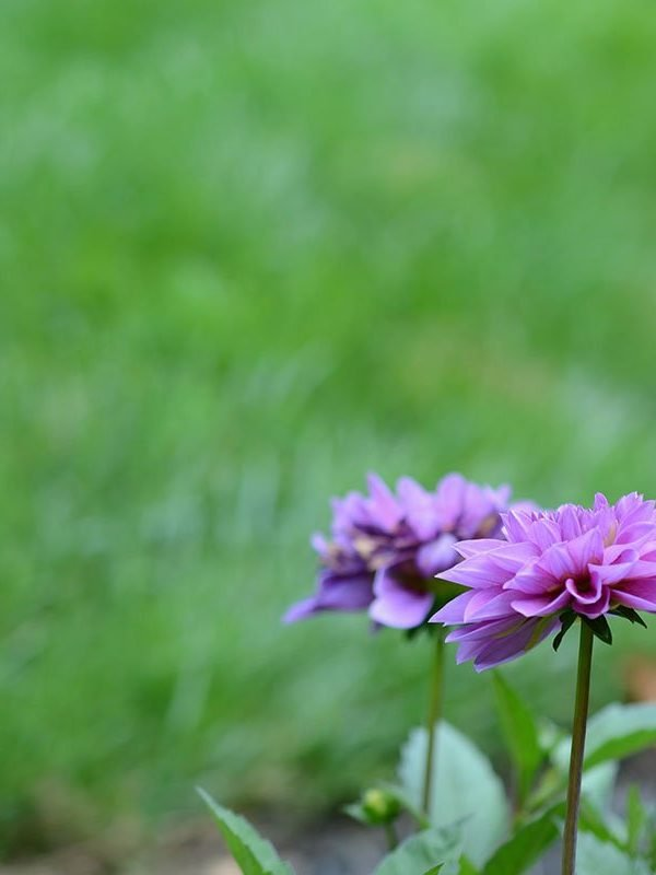 Free Lawn + Garden Maintenance Planner