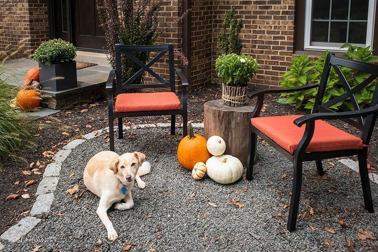 two chairs on a patio with pumpkins and a dog
