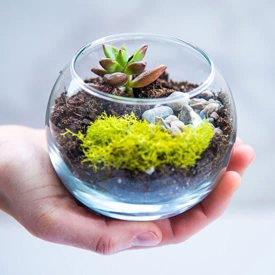 mini terrarium kit by Verdure