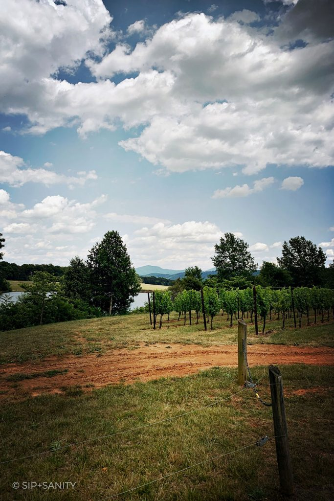virginia wine country dirt road, grape vines, a pond and mountains beyond